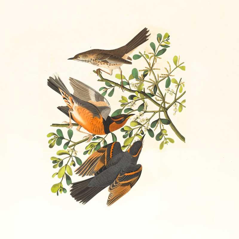 Fågelsafari på Öland